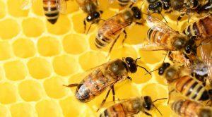 Arnia per apicoltura