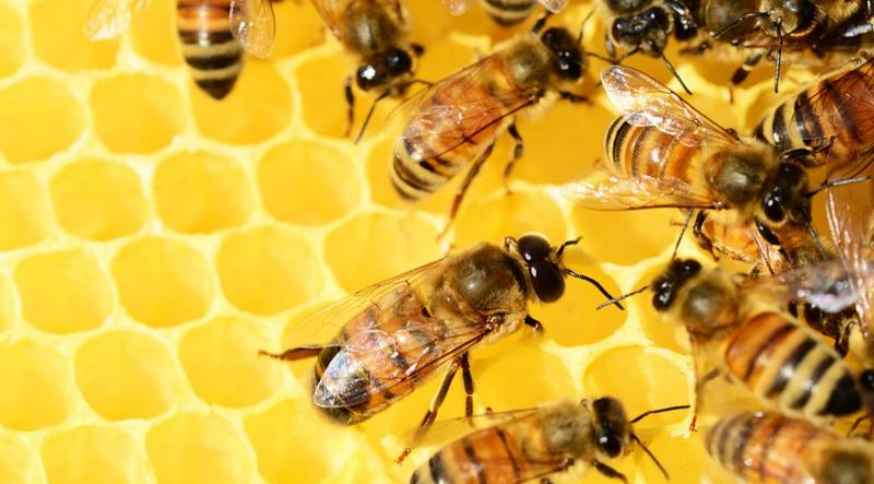 Come fare il miele in casa con l'arnia per apicoltura