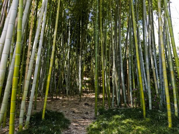 Le coltivazioni di bambù sono davvero il business del momento?
