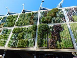 Giardini verticali, la nuova moda che fa bene all'ambiente