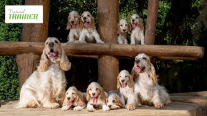 Cibo per cani qual'è il migliore per il proprio animale