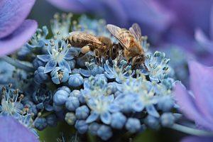 Rughe: come rimuoverle con la crema al veleno d'api